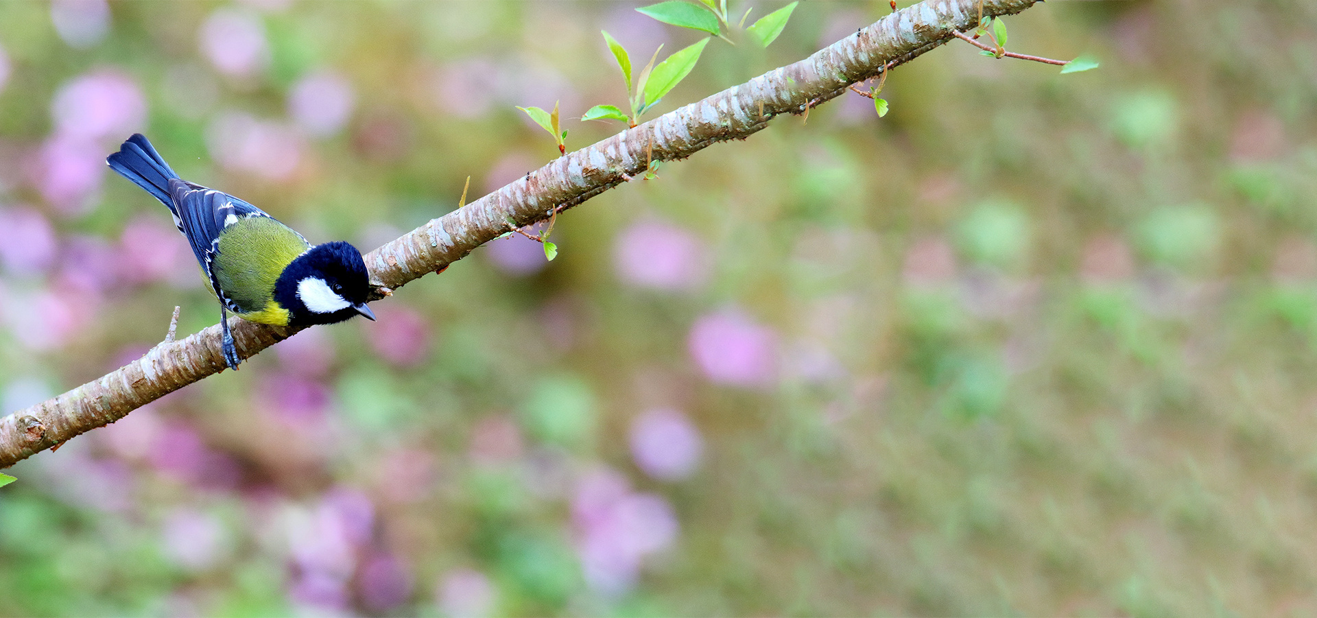 推動野鳥欣賞、保育及研究
